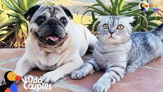 Cat Who Lost His Dog Best Friend Finds Beautiful Way To Love Again   The Dodo Odd Couples