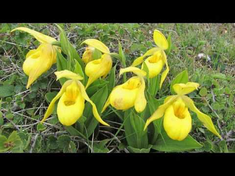 Different types of yellow flowers youtube different types of yellow flowers mightylinksfo