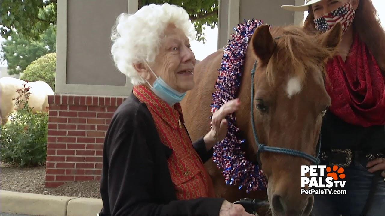 Horse of Hope brings smiles
