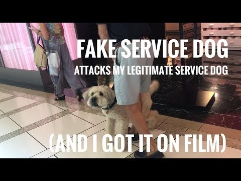FAKE SERVICE DOG ATTACKS MY REAL SERVICE DOG ON FILM