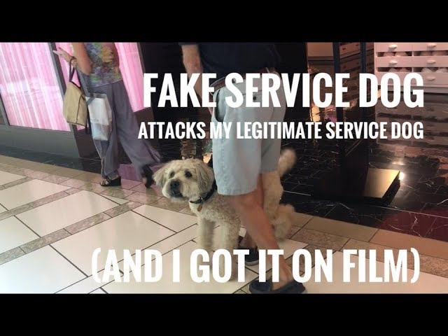 fake-service-dog-attacks-my-real-service-dog-on-film