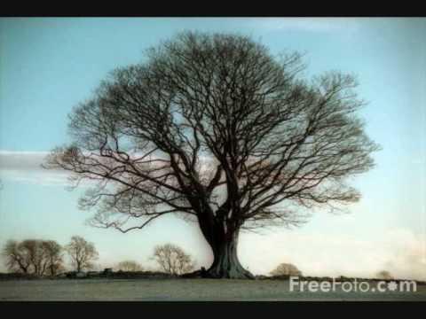 sycamore tree-paul brandt
