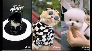 TikTok Pet Thú Cưng Chó Mèo Cขte Dễ Thương Siêu Lầy Lội #1 | TiĸToĸ Việt Nąm | Doขyin Trขng Quốc
