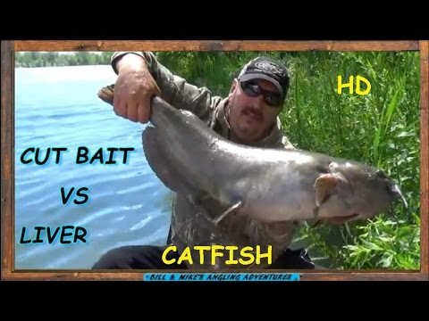 CUT BAIT VS CHICKEN  LIVER CATFISH BAIT CHALLENGE