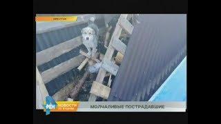 Спасённых из зоны затопления собак и кошек привезли в Иркутск