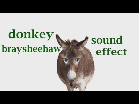 The Animal Sounds: Donkey Braysheehaw - Sound Effect - Animation