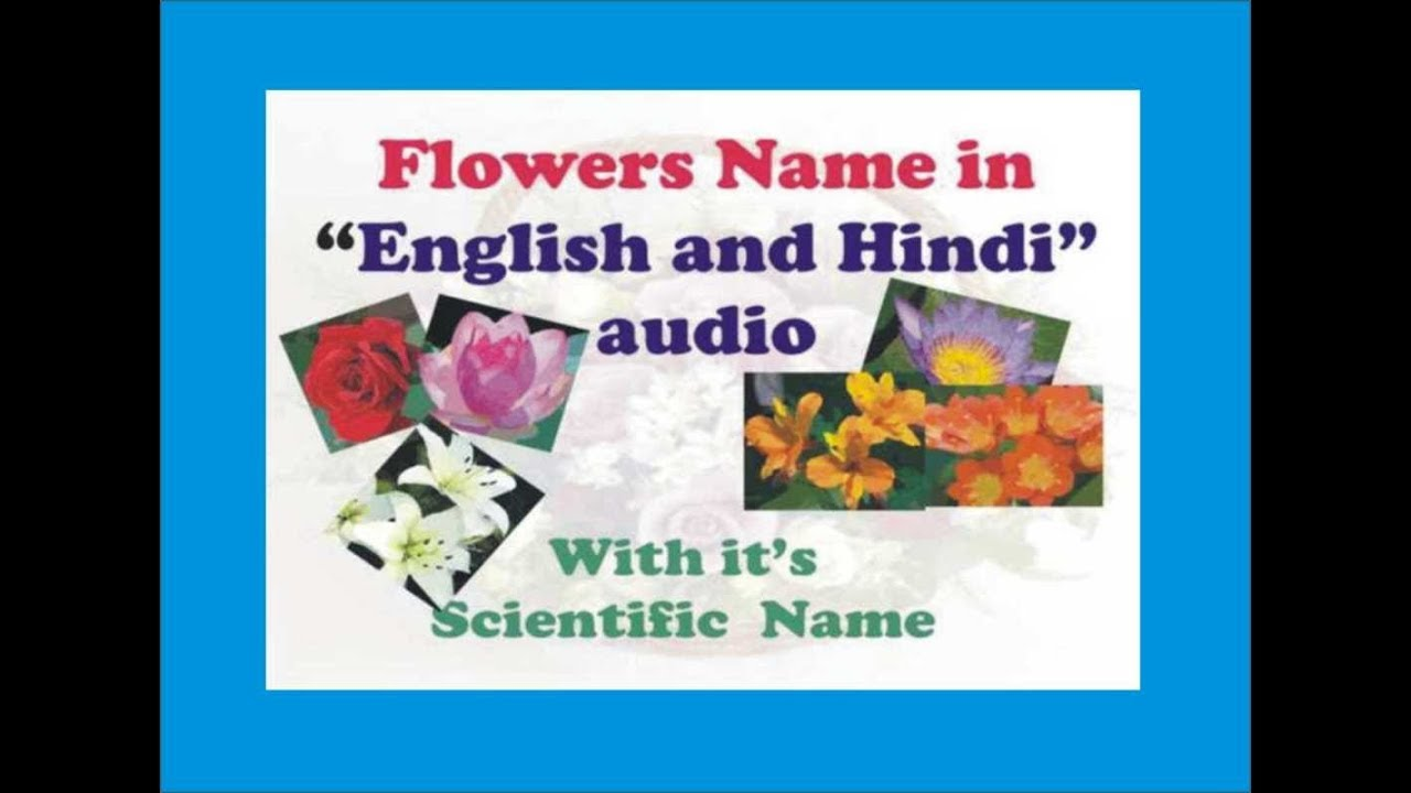 Flowers name in English and Hindi audio with it\u0027s scientific names
