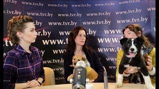 """Помощь бездомным собакам и проект """"Путь домой"""". Online-конференция"""