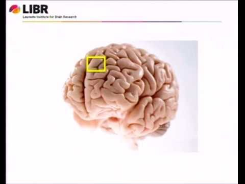 How the Brain Grows Up - Dr. Martin Paulus - Healthy Brains for a Healthy OK