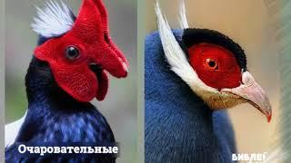 Топ самых редких и необычных птиц мира  - красивые птицы мира