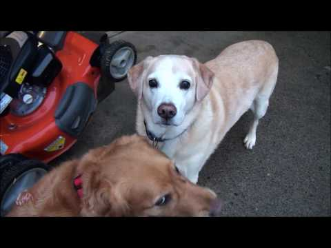 How To Fix - Self Propelled LAWNMOWER FRONT Drive WHEELS STOPPED TURNING