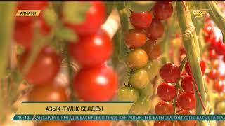 Алматы облысында жылыжай көлемін 20 гектарға ұлғайту көзделіп отыр