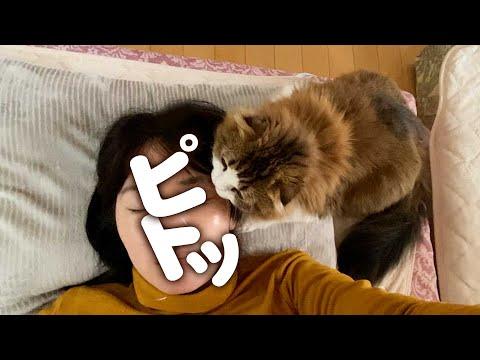 体調不良で寝込むママの側から一刻も離れない猫