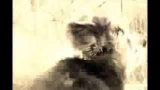 Richie´s Film (tibet Terrier) Süßester Hund Der Welt