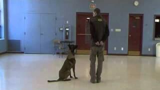 Dog Training - Competition Heeling, Episode 3
