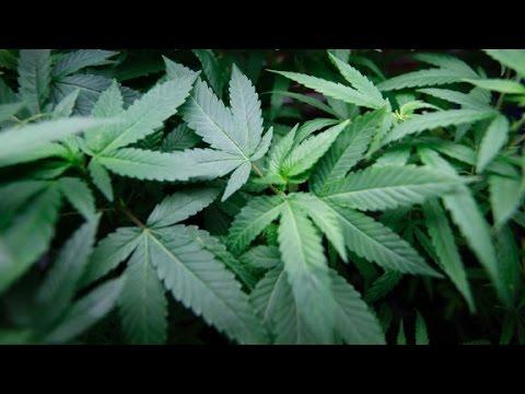 Investors betting on marijuana in U.S.