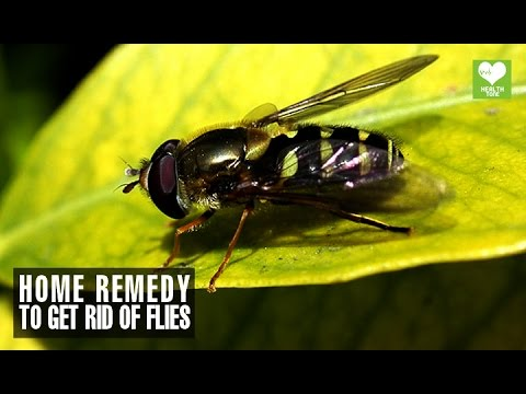 how to get rid of flies outside home remedies