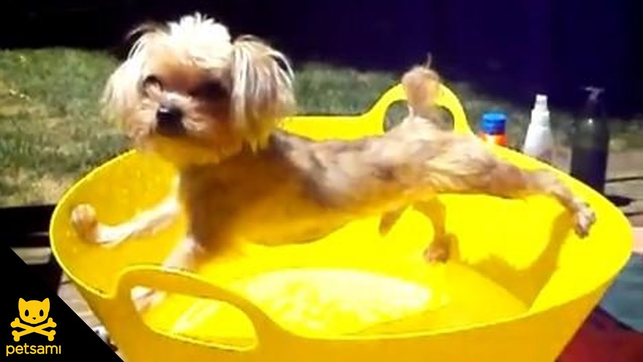 cute dog does his best to not get wet   youtube