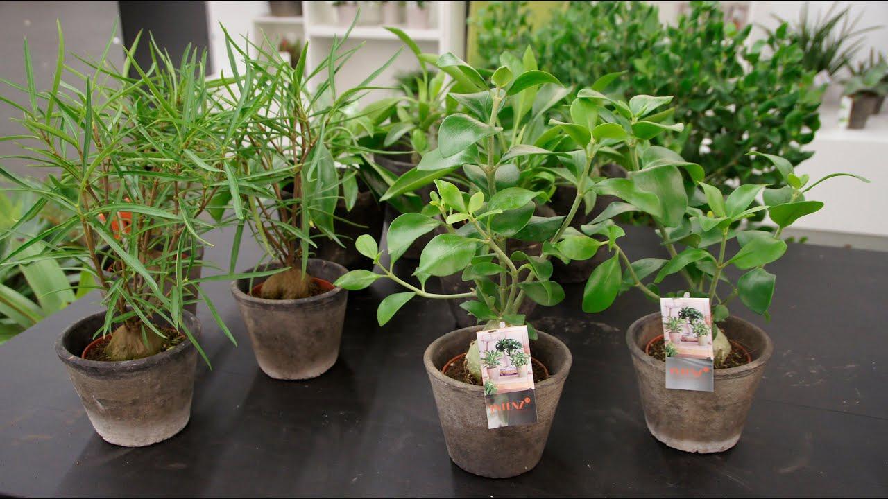 Mysterieuze planten in de markt  YouTube