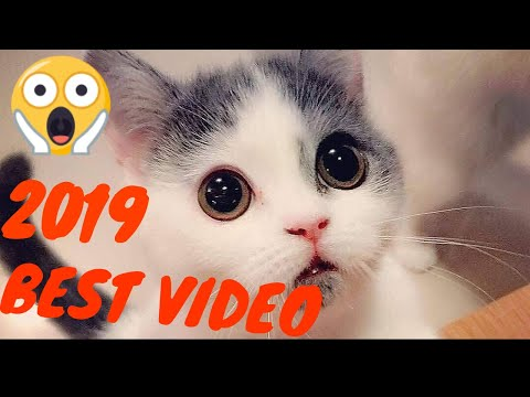 🙀Best 2019 cat video - Funny cat video / Cute cats and kittens