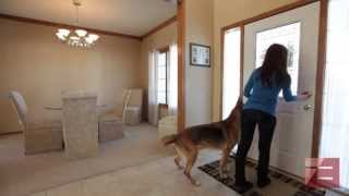 Real Estate Video Blog: Reducing Your Pets' Stress During a Move
