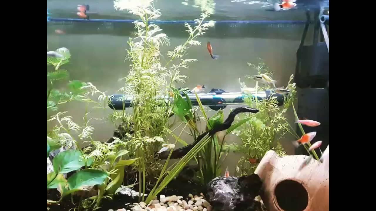 Freshwater Aquarium Fish In Dubai - Dubai pet fish