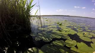Рыбалка в Тюмени Карасики на удочку Озеро кувшинки клёв