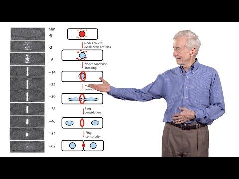 Thomas Pollard (Yale University) 3: The mechanics of cytokinesis