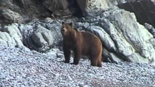 Шантарский архипелаг. Охотское море. 2005, 2007 год. (фильмы А.Чубаркина)