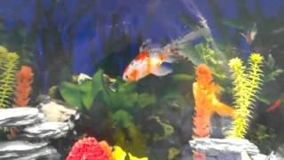 Aqua One Aquarium Cabinet For Sale Stevenage