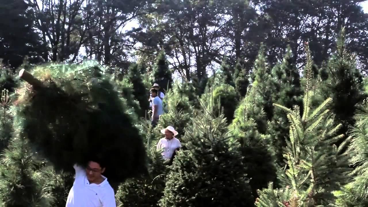 bosque de los rboles de navidad ven por tu rbol de navidad youtube