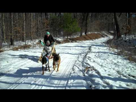Dog Sledding.MP4