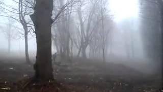 Wycinka drzew w zabytkowym Parku Migowo