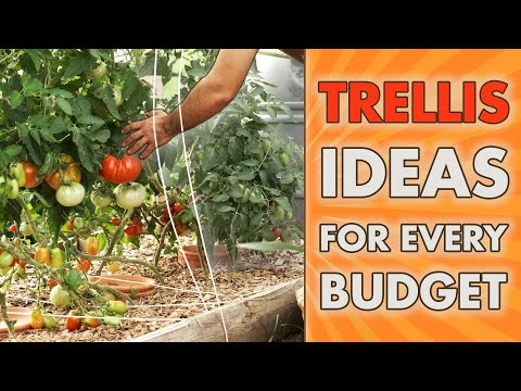 VERTICAL GARDENING IDEAS – for Every BUDGET!