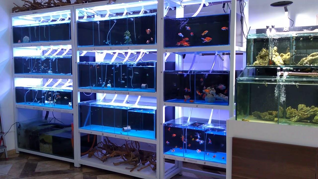 Loja Gap Aquarismo