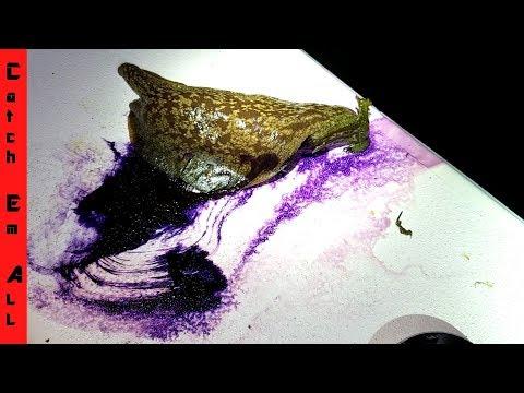 Caught PURPLE SLIME CREATURE in OCEAN! Help Identify it!