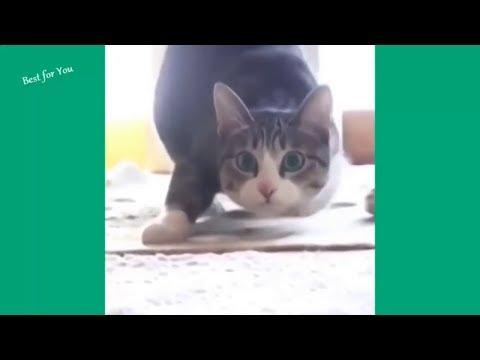 GATTI DIVERTENTI Compilation : VIDEO