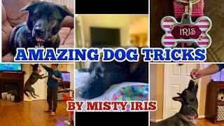 Amazing Dog Tricks by Misty Iris