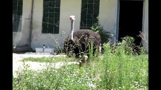 Birds in Sofia Zoo | Krisi and Marty Tour | Птици в зоопарк София