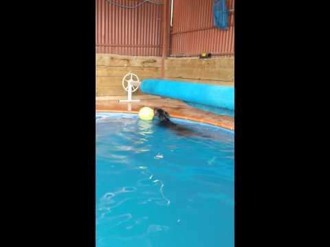 Swimming Buddy