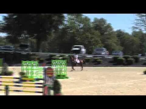 Video of GOLDEN BOY ridden by ANNE GARDNER from ShowNet!