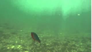 Strike Pro Buster Jerk II Shallow Runner | 12 cm video