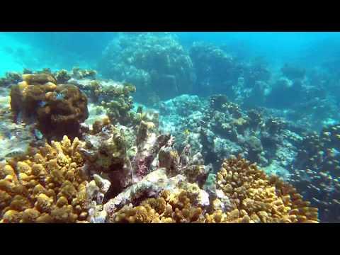 snorkeling seychelles 03 2017 | sony FDR-X3000