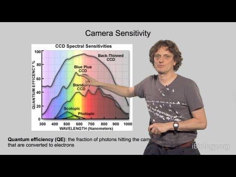 Microscopy: Cameras and Digital Image Analysis (Nico Stuurman)