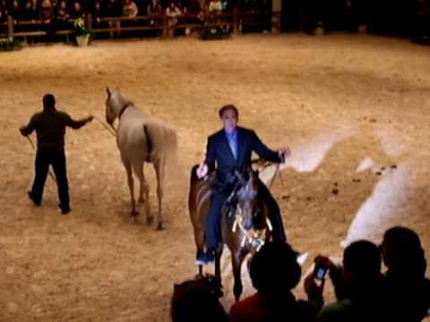 Marwan Al Shaqab World Arabian Stallion Champion 2...
