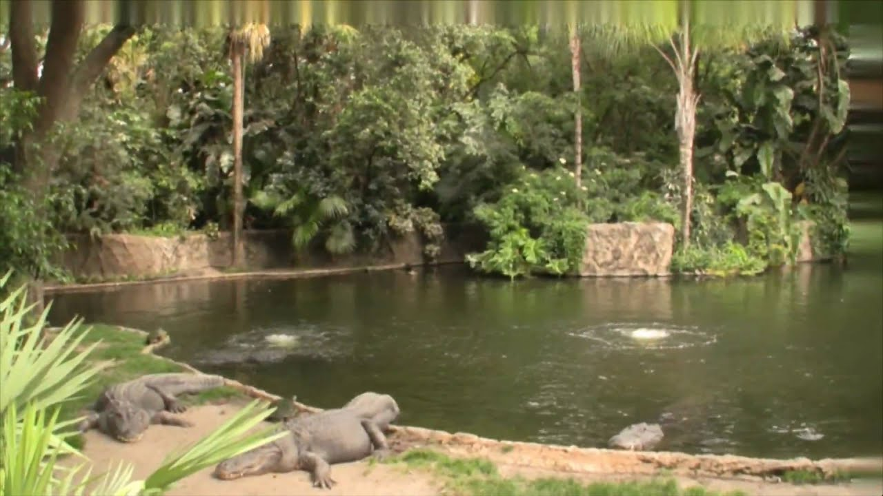 Disney Animal Kingdom and Busch Gardens 1-3 - YouTube