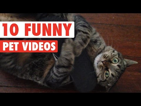 Funny Pet Video Countdown Compilation