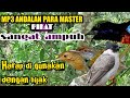 Suara Pikat Burung Kecil Paling Ampuh Anti Zonk  Mp3 - Mp4 Download
