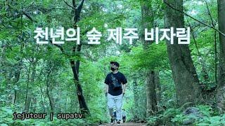 혼자여행 / 비자림 숲 속에서 힐링하기 (feat. 용…