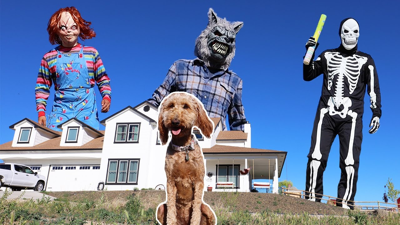 Giant Skeleton Surprises Puppy With Dancing House Party